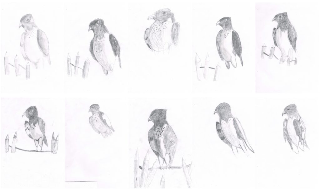 Drawing Falcons